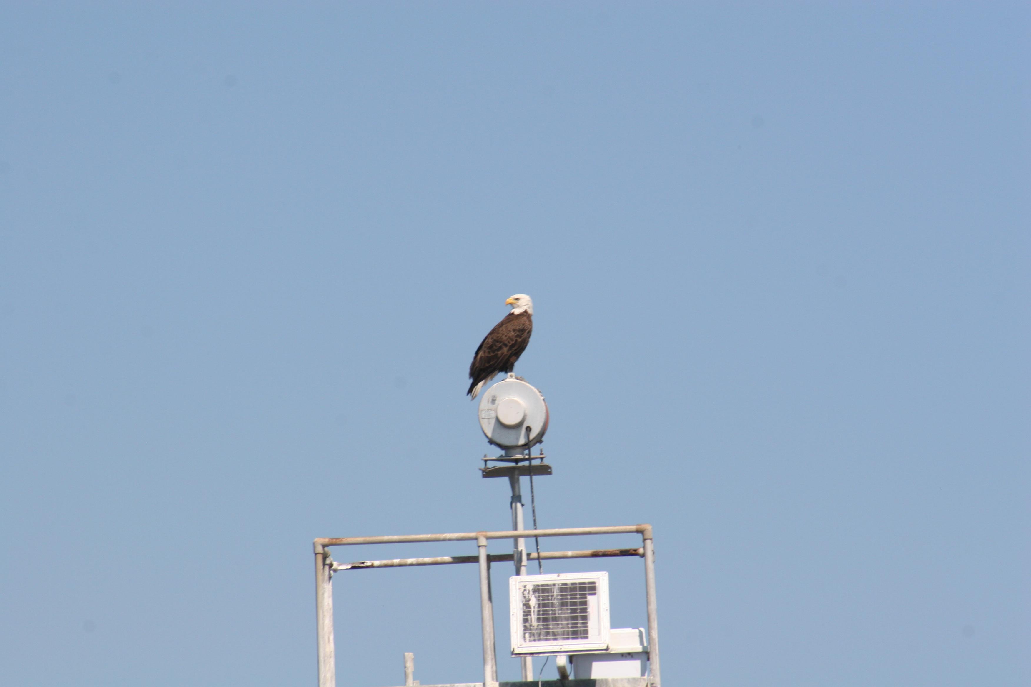 2012-03-15-eagle-icw-002
